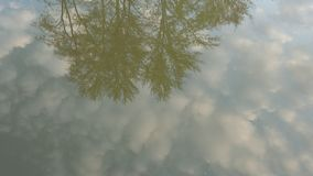 Display of crowns of trees in water against the background of a clear sky. Stock Photo