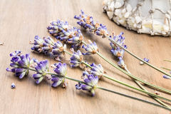 A Display of Dried Lavender with Sea Shells Royalty Free Stock Photos