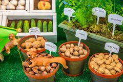 Labeled Display Variety of Nuts and Potted Herbs. Display of English walnuts, hazelnuts, pecans, and almonds and potted basic, dill weed, and marjoram, and stock photo