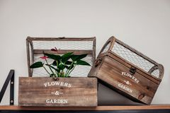 Exquisite flower shop plant and cage stock images