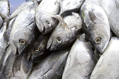 Display of fishes Royalty Free Stock Photography