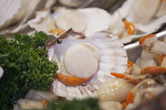 Display Of Fresh Oysters On Market Stall royalty free stock image