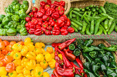 Display of fresh peppers at the market Stock Images