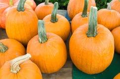 Display of fresh pumpkins Royalty Free Stock Image