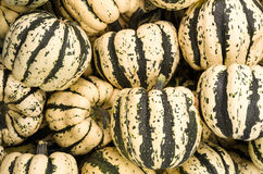 Display of fresh winter squash Stock Photography