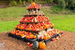 Display of pumpkins, squash and gourds Royalty Free Stock Image