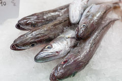 Display of frozen horse mackerels for sale at a Royalty Free Stock Image