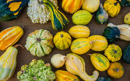 Display of gourds, squashes and pumpkins. Colorful market stall of gourds, squashes and pumpkins Royalty Free Stock Image
