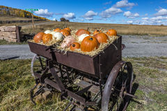 Display of Halloween Pumpkins, Hastings Mesa, Colorado - near Ridgway, October 1, 2016 stock photo