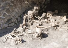 Display of human skeletons, Parco Archeologico di Ercolano. Pictured is a display of human skeletons in the Parco Archeologico di Ercolano. The archaeological Royalty Free Stock Image