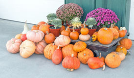 Display of local pumpkins, gourds and flowers. Upstate rural New York farmstand Royalty Free Stock Photo