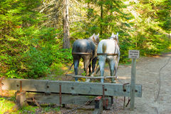 A display at a logging museum in northern ontario. Man-made horses representing the old-fashioned mode of transport in the logging industry as seen at algonquin stock photos