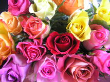 Display of multicolored roses. Photograph of a display with very bright, multi colored roses Stock Photos