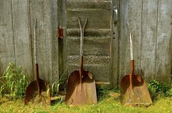 Display of old shovels. Three old worn out rusty shovels lean against a weathered wooden fence royalty free stock images
