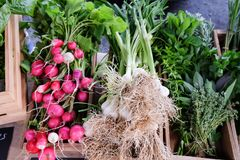 Display of organic produce at a farmers market in New Zealand, N. Z - radishes, green garlic, herbs, sage, basil, mint, thyme Stock Images