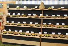 Display of pear varieties Royalty Free Stock Images