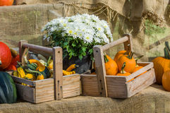 Display of pumpkins and fall gourds Stock Photography