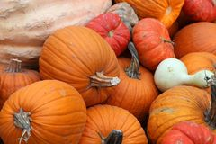 Display of assorted Pumpkins Royalty Free Stock Images