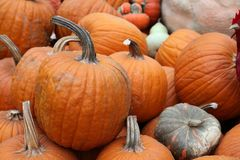 Display of assorted Pumpkins Royalty Free Stock Image