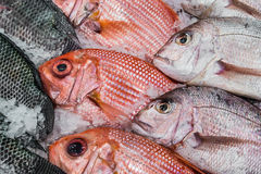 Display Red Snapper and Tilapia Stock Photo