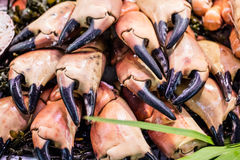 Display of several fresh cut crab craws for gourmet seafood Royalty Free Stock Images