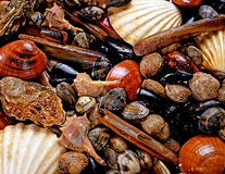 Display of shellfish. With a wide variety of fresh mollusks, cockles, mussels and oysters for use in seafood cuisine Royalty Free Stock Images