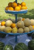 A display of watermelons and melons in the sunlight stock photography