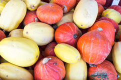Display of winter squash for storage. At the market stock images