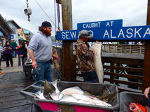 Displaying halibut at seward's port Royalty Free Stock Photography