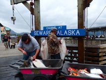 Displaying halibut at seward's port Royalty Free Stock Photos
