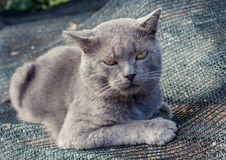 Displeased gray cat is lying on gray grid. Stock Images