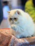 The displeased kitten stock photos