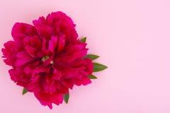 Disposição criativa da flor vermelha da peônia e do papel colorido para o texto, Foto de Stock Royalty Free