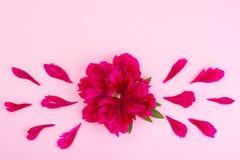 Disposição criativa da flor vermelha da peônia e do papel colorido para o texto, Imagem de Stock Royalty Free