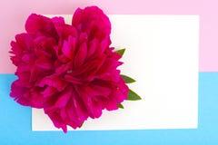 Disposição criativa da flor vermelha da peônia e do papel colorido para o texto, Imagens de Stock