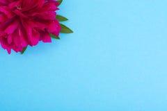 Disposição criativa da flor vermelha da peônia e do papel colorido para o texto, Fotografia de Stock Royalty Free