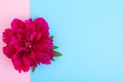 Disposição criativa da flor vermelha da peônia e do papel colorido para o texto, Fotografia de Stock