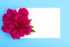 Disposição criativa da flor vermelha da peônia e do papel colorido para o texto, Fotos de Stock