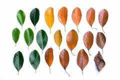 Disposição criativa das folhas de outono coloridas Configuração lisa imagem de stock