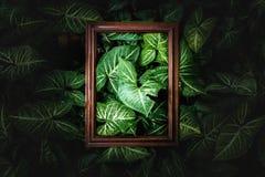 Disposição criativa feita das folhas de madeira no darklight, projeto do quadro e do verde da disposição da natureza Imagem de Stock Royalty Free