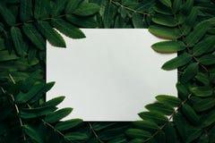 Disposição criativa feita das folhas verdes Configuração lisa Conceito da natureza Fotos de Stock