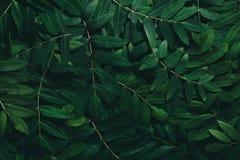 Disposição criativa feita das folhas verdes Configuração lisa Conceito da natureza Imagem de Stock Royalty Free