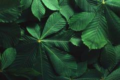 Disposição criativa feita das folhas verdes Configuração lisa Conceito da natureza Imagem de Stock