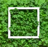 A disposição criativa feita sae com o quadro do Livro Branco Configuração lisa Conceito da natureza Fotografia de Stock