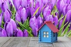 Disposição da casa de madeira nos açafrões de florescência do fundo Fotos de Stock