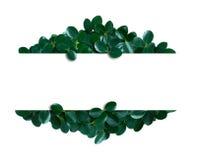 Disposição da natureza feita das folhas tropicais com nota do cartão de papel Imagens de Stock Royalty Free