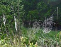 Disposição de Web de aranha em um prado Fotos de Stock