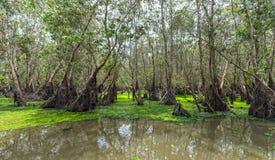 Disposição do flutuador da lentilha-d'água do lado da floresta do cajeput de Tra SU Fotos de Stock
