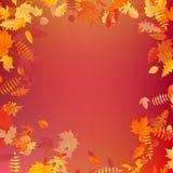 A disposição do molde do outono decora com folhas Eps 10 ilustração stock