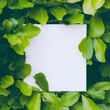 Disposição feita das folhas com nota do cartão de papel Configuração lisa Conceito da natureza folhas do verde Disposição criativ Imagens de Stock Royalty Free